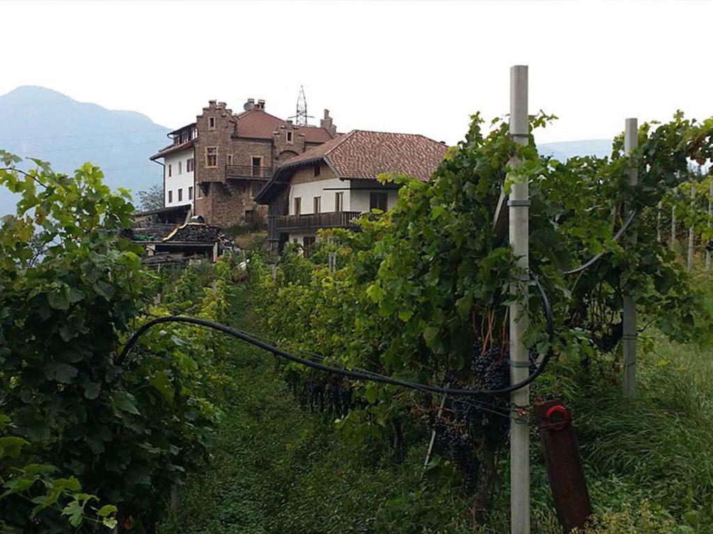 Obst- und Weinanbau - Gasthof Wendlandthof